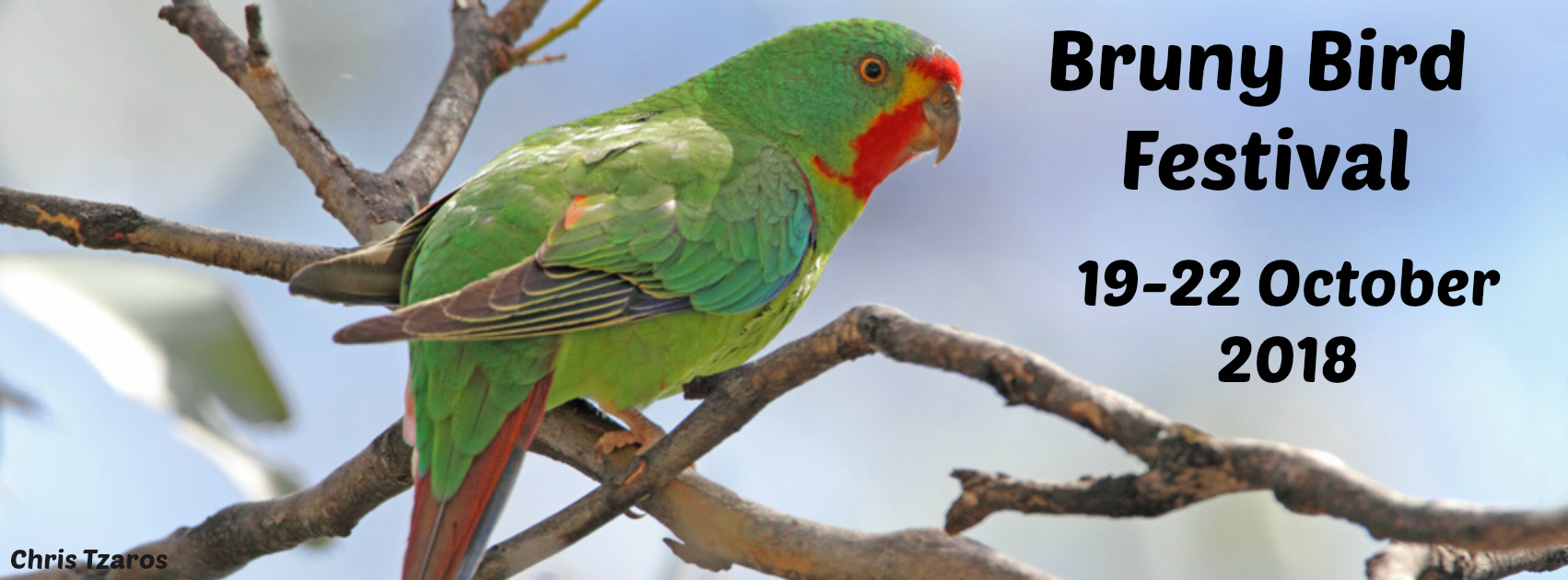 Swift Parrot BBF